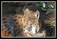 Animals_045_copia.jpg