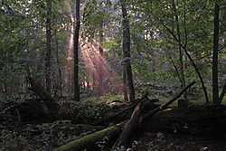 Bialowieza_National_Park.JPG